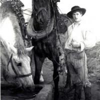horsesatthewateringtrough.jpg