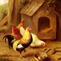 huntedgarchickensfeeding.jpg