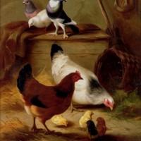 huntedgarpigeonsandchickens.jpg