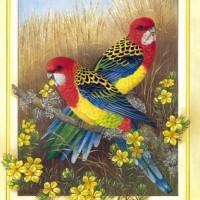 paustralianbirdscal200302.jpg