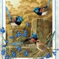 paustralianbirdscal200305.jpg